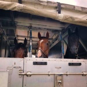 Horses in standing jet stalls