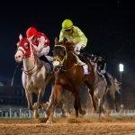 Goshawke over Mawahib in the 2200m R2Al Maktoum Challenge on 31-1-19